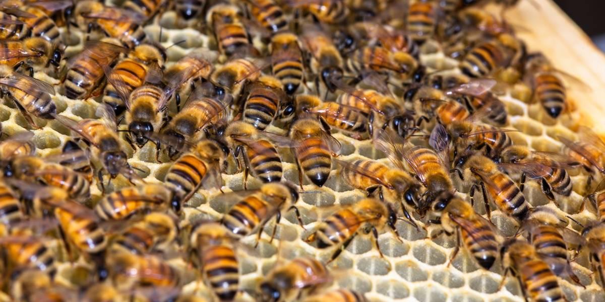 Enxame de abelhas invade avião e impede decolagem