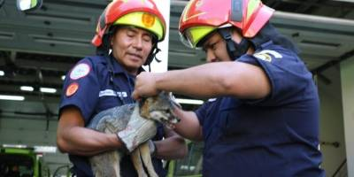 Rescate de animales silvestres