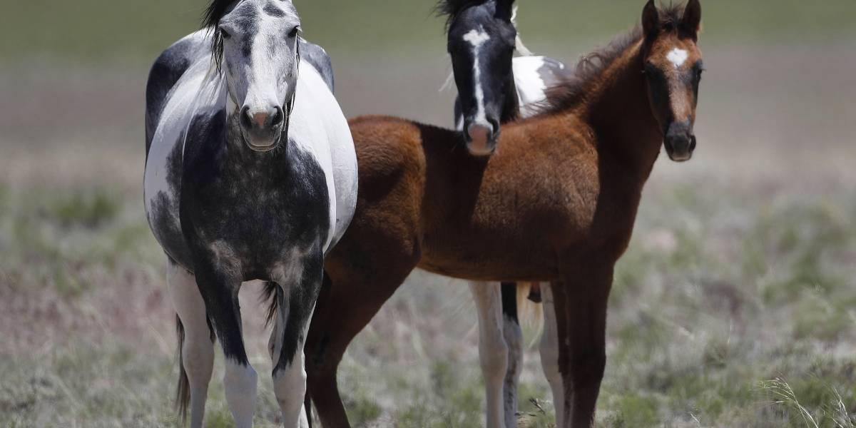 Você sabia que em SP dá para adotar bois, porcos e até cavalos?