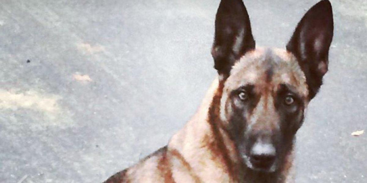 Video: para no dejarse capturar hombre muerde a perro policía