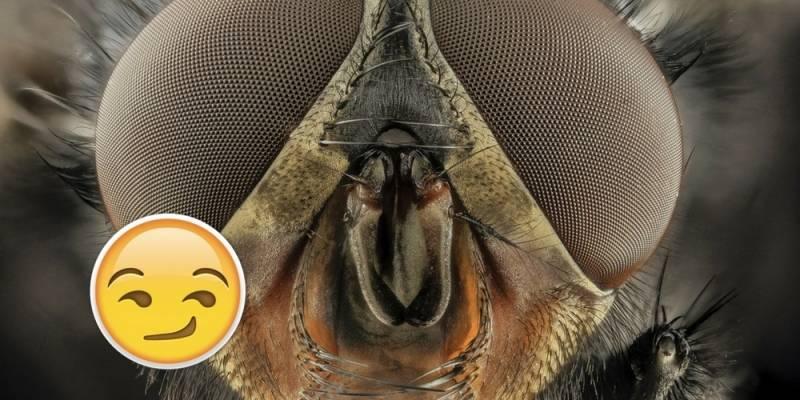 Las moscas aman eyacular: lo ha confirmado un estudio científico
