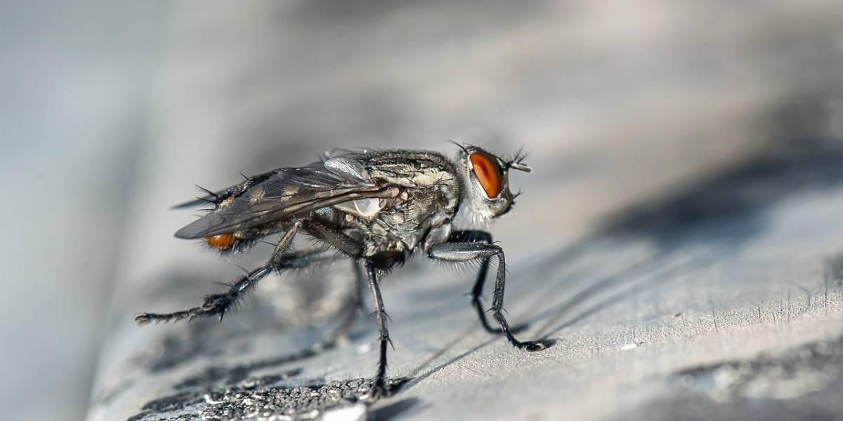 ¡Está pasando! Las moscas sí pueden volverse zombies, la ciencia lo ha comprobado