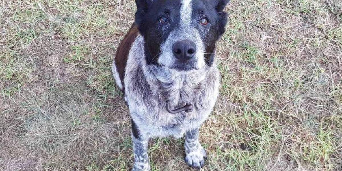 Este si es un héroe: perro de 17 años sordo y casi ciego cuidó a niña perdida y logró que rescatistas la encontraran