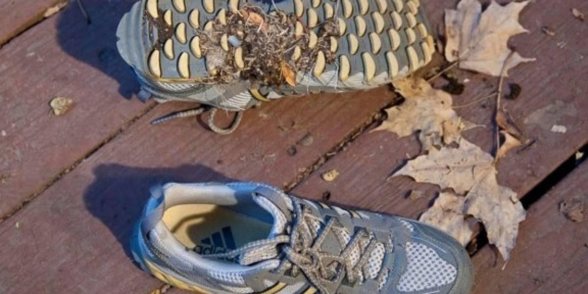 Nada de buena suerte:  joven terminó preso por pisar caca de perro