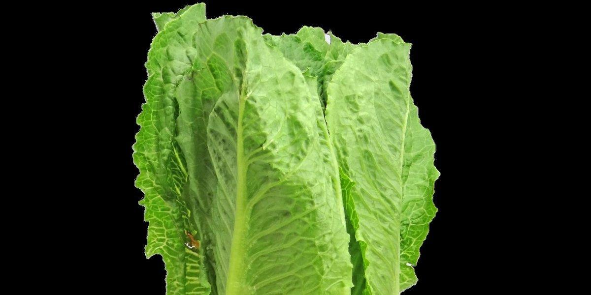 Autoridades de EU piden tirar la lechuga romana por brote de E.coli en el país