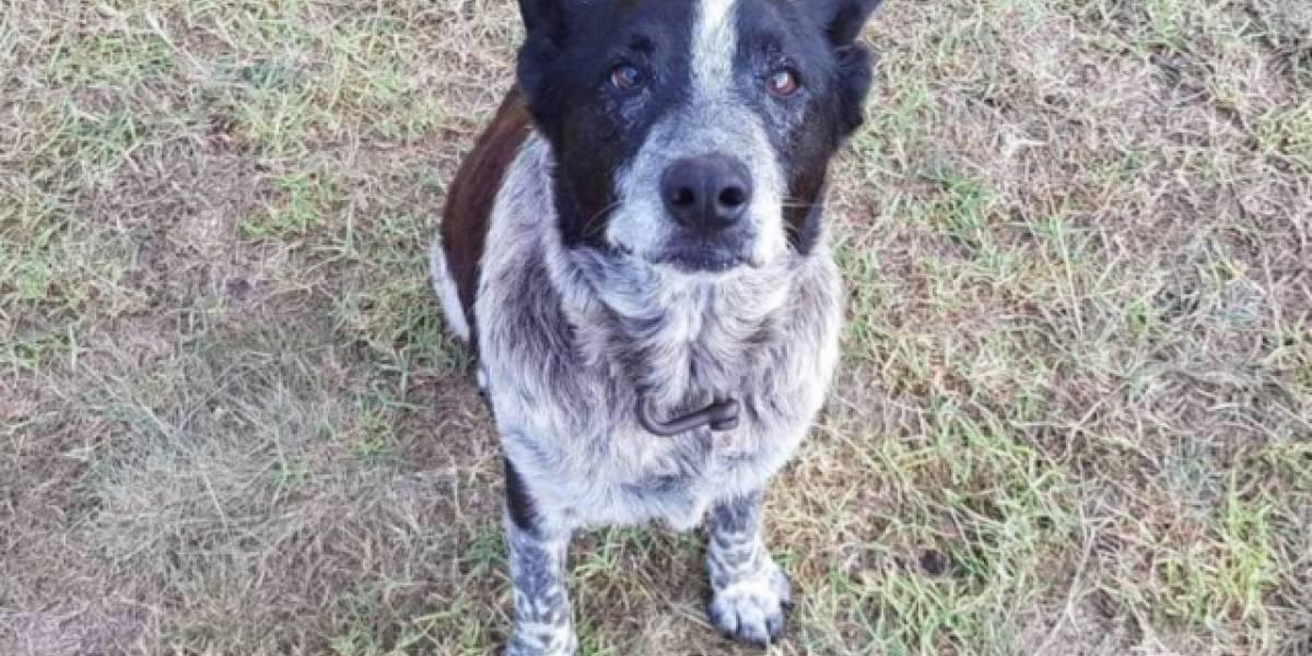 Cão surdo e parcialmente cego ajuda no resgate de menina