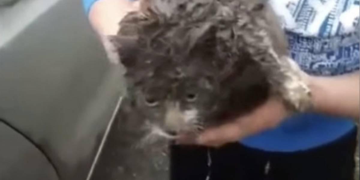 Video: Gatita se quedó pegada debajo de un auto y recorrió más de 100 kilómetros