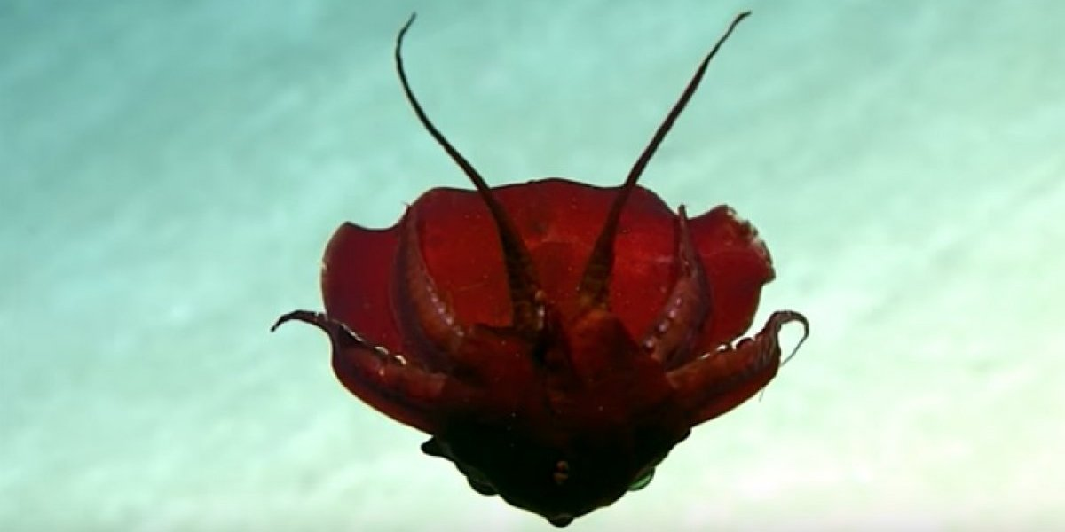 Se descubre criatura 'extraña' en el golfo de México