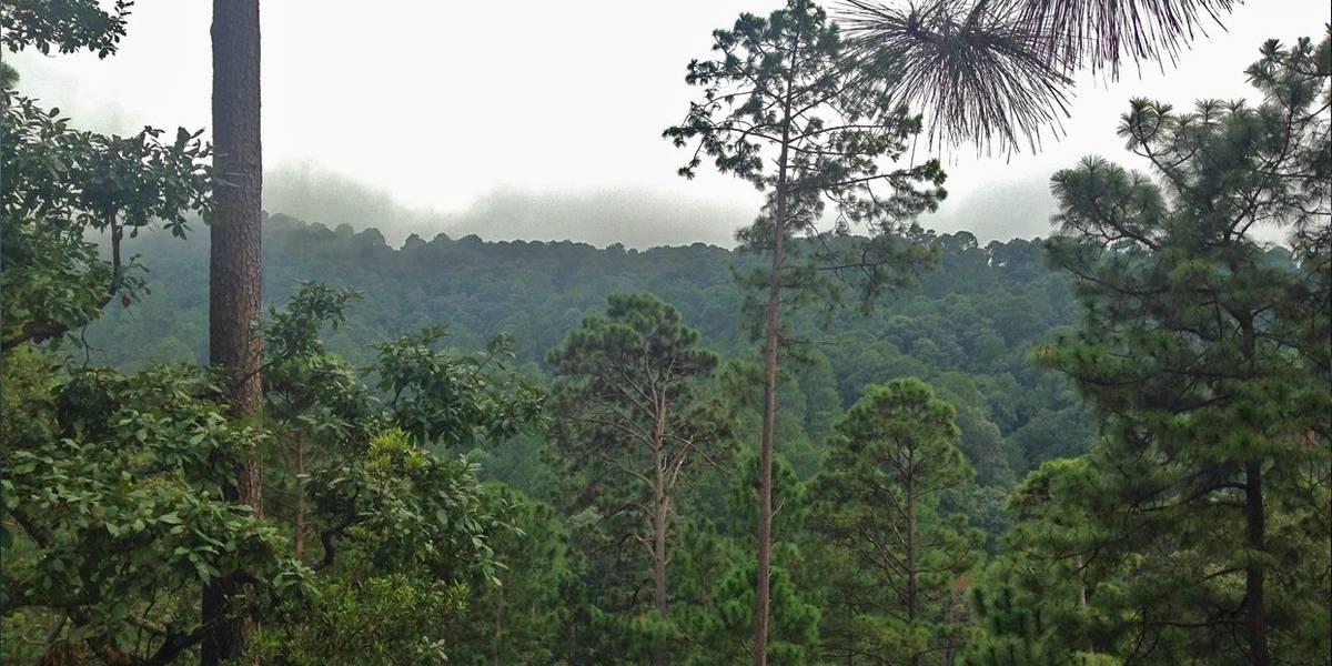 CNDH pide mayores políticas para proteger el medio ambiente