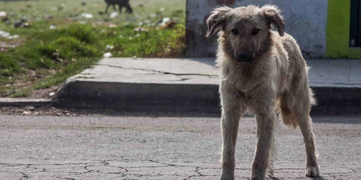 Estudiante mexicana crea croquetas anticonceptivas para perros callejeros