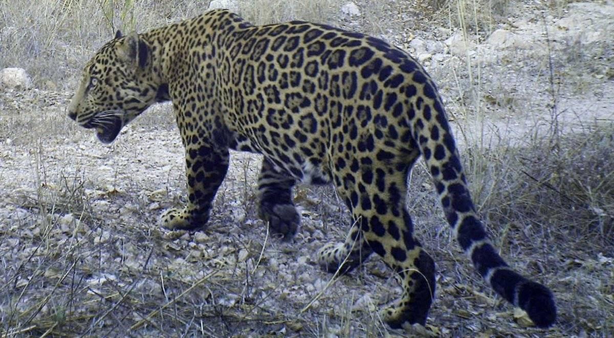 Disney celebra a laTierra premiando a organizaciones conservacionistas en LATAM