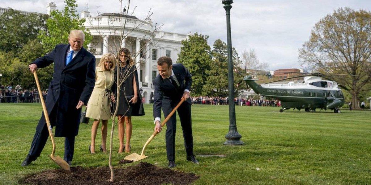 ¿Qué significa el árbol que Macron regaló a los Trump?