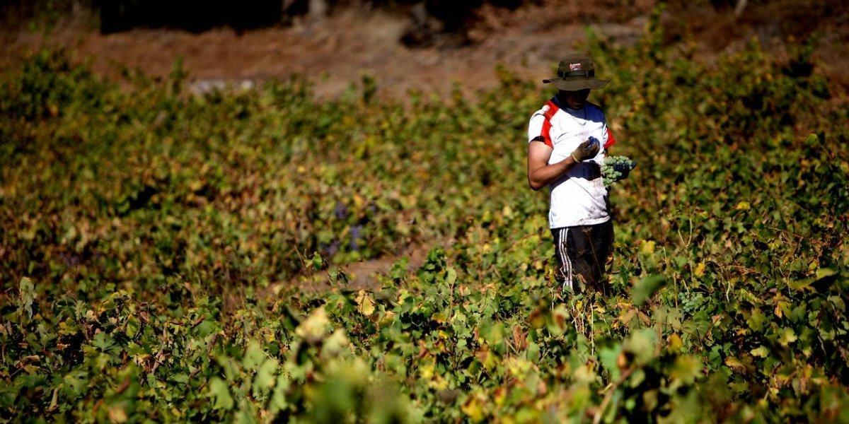"""Ministro Walker propone visa especial para migrantes temporeros: """"El agro los necesita"""""""
