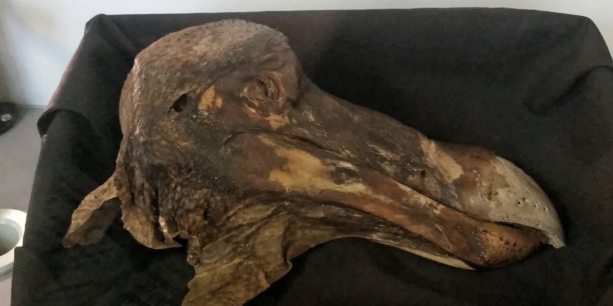 La tecnología revela quién es el culpable de la extinción del famoso pájaro Dodo