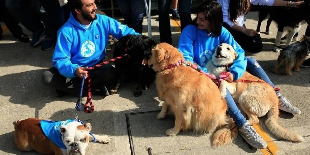 Lleve gratis a su mascota a esta jornada implantación de microchip y chequeo veterinario en Bogotá