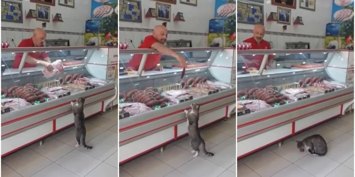 """""""Deme medio kilo de lomo"""": gato se convirtió en uno de los clientes más especiales en una carnicería turca"""
