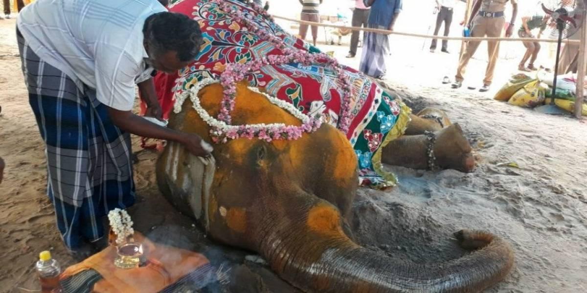 O trágico destino de milhares de elefantes usados em rituais e turismo na Índia