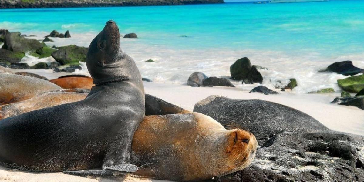 """Ecuador apuesta por hacer de Galápagos """"un archipiélago libre de plástico"""""""