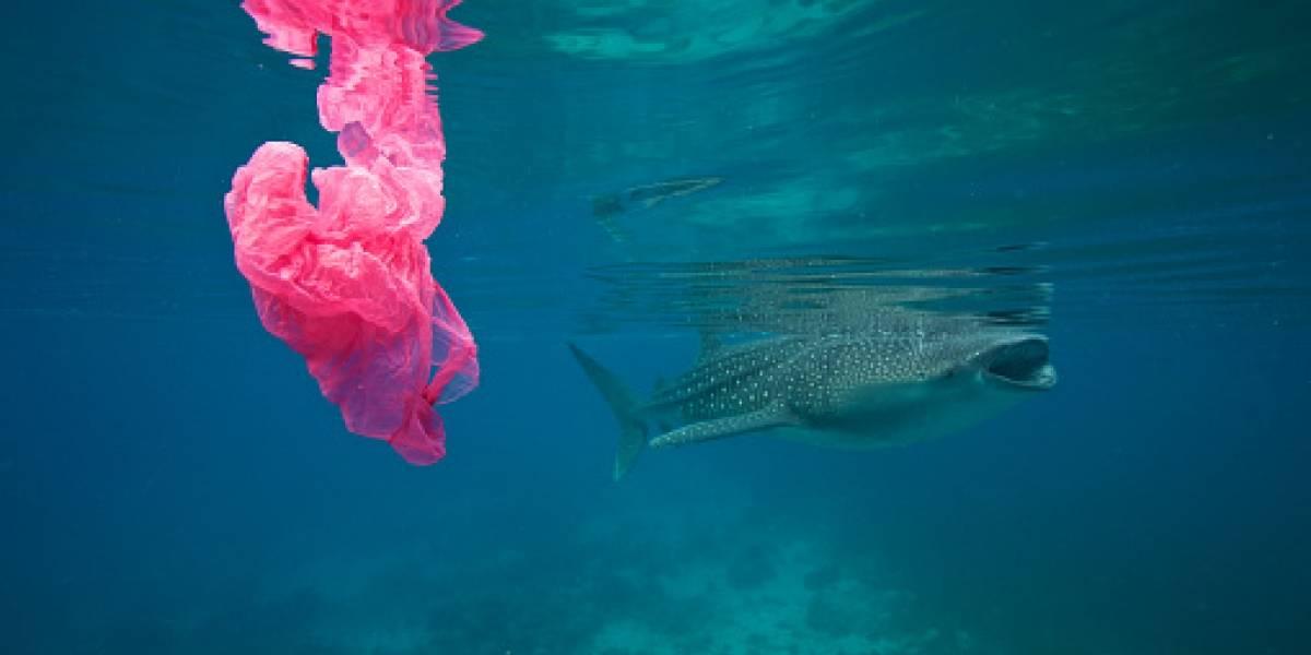La monstruosa red que busca recoger los 1,8 trillones de pedazos de basura plástica que los humanos hemos lanzado al Océano Pacífico