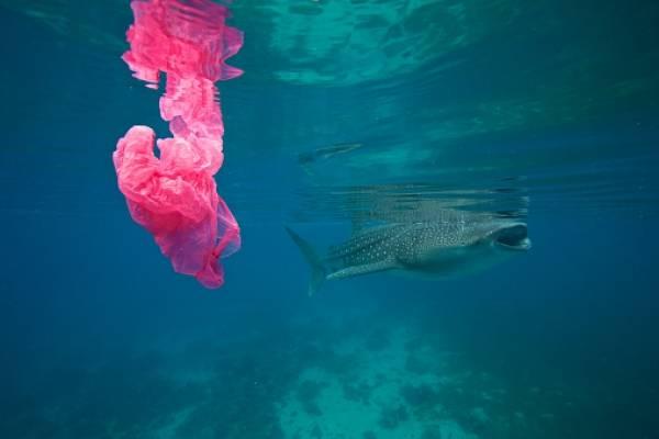 Plástico océano