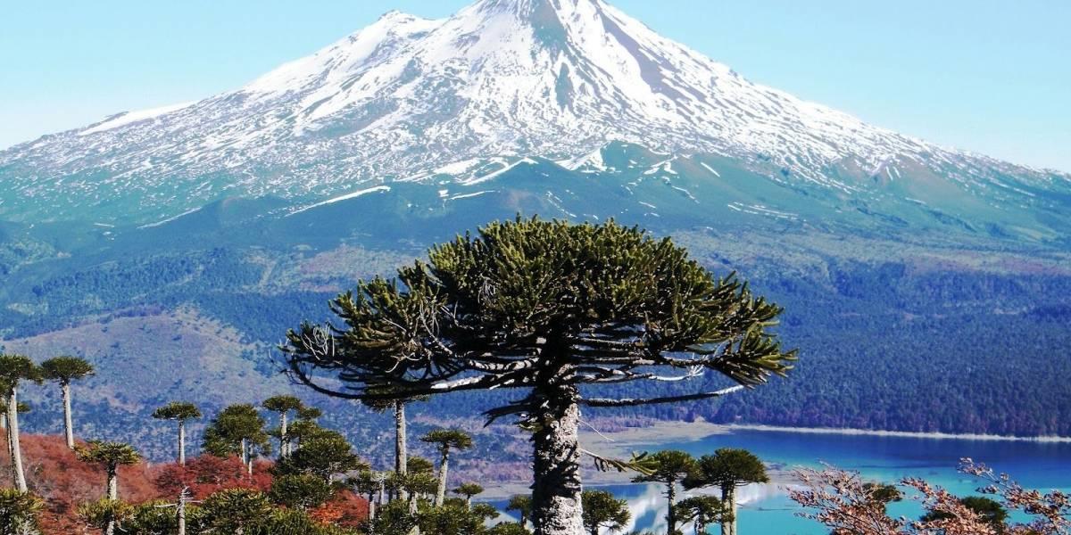 Chile: Se anuncia acuerdo para vender artesanía de La Araucanía en Amazon