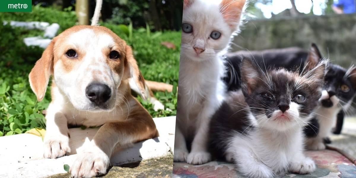 Feira de adoção de cães e gatos em Diadema procura lares cheios de amor