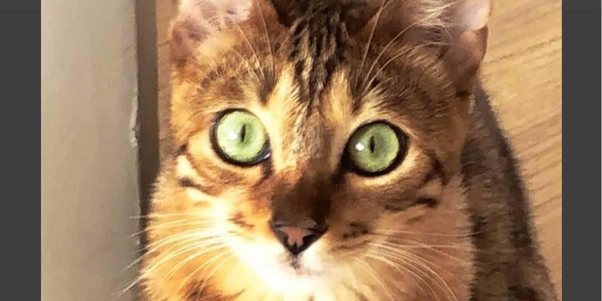 Após morte de macaco, Latino adota gato como animal de estimação