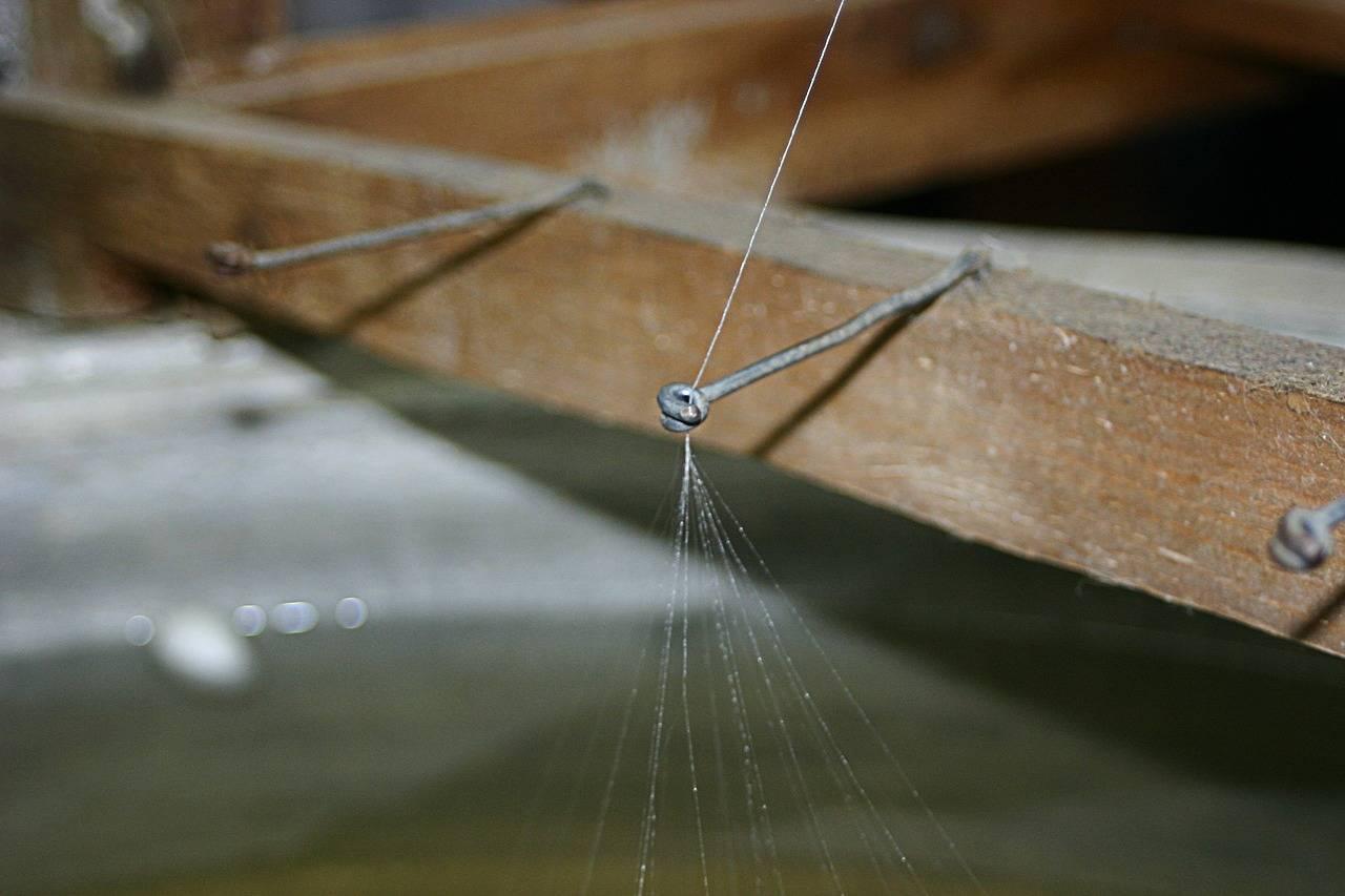 Mexicanos crearon un antídoto contra el veneno de la temida araña violinista o de rincón