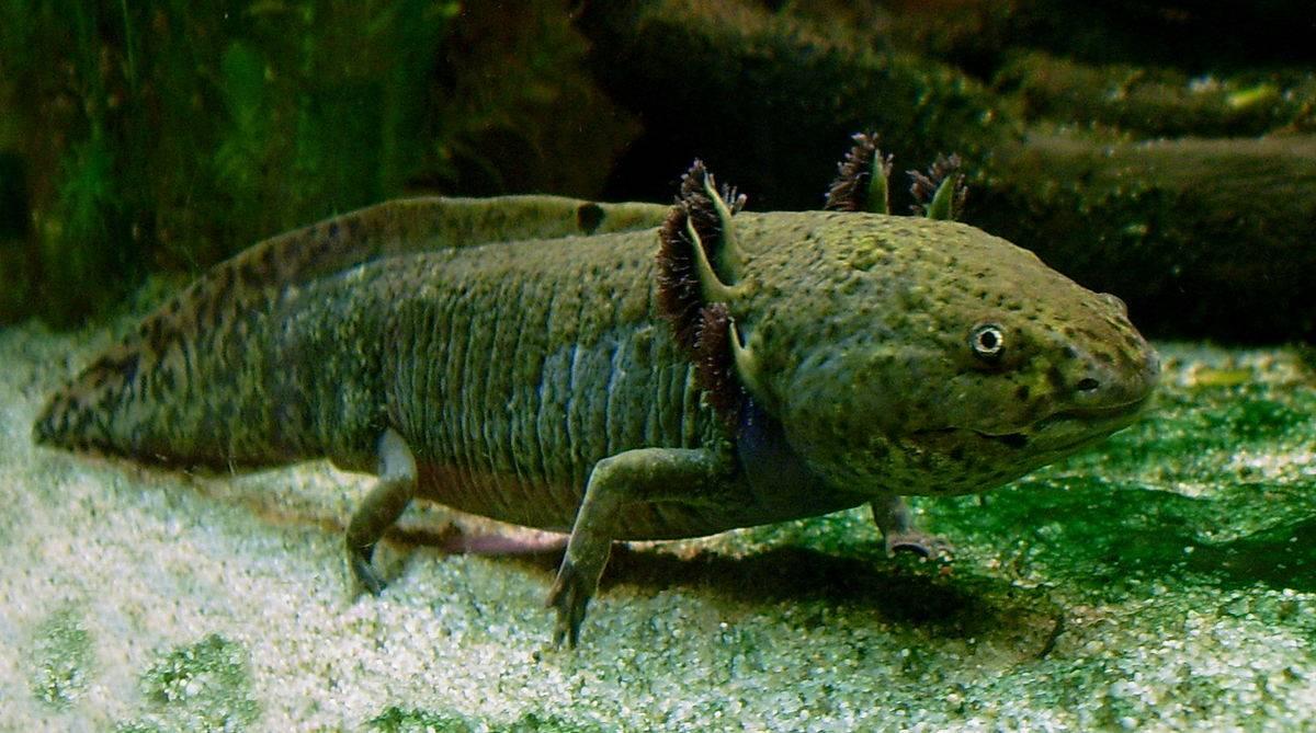 Malas noticias, México: Un tercio de los peces mexicanos están en peligro de extinción