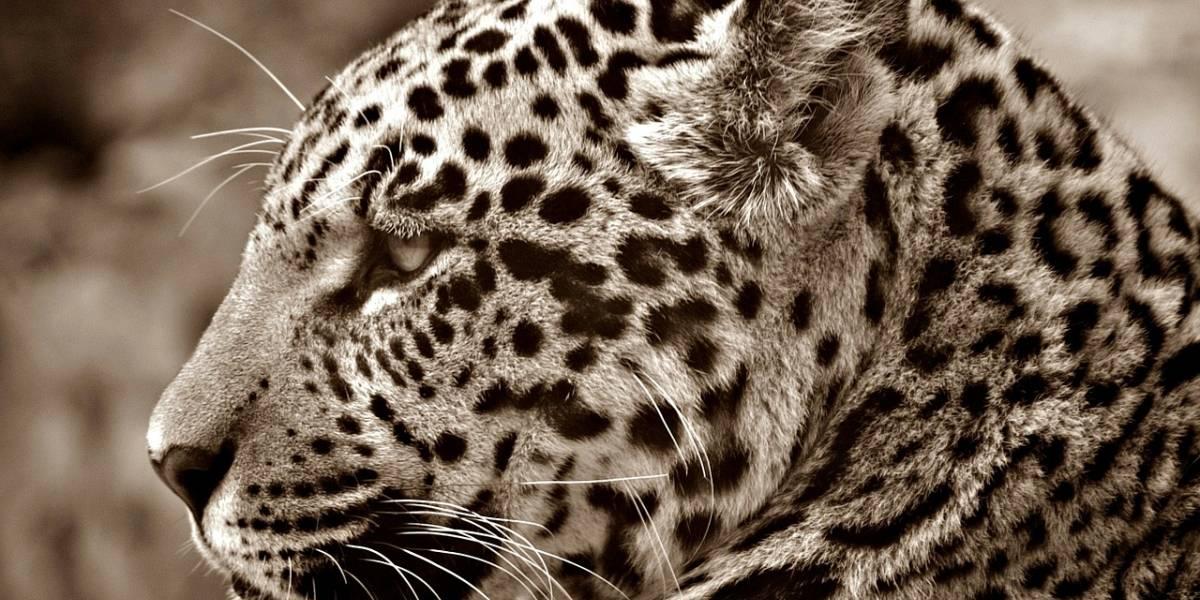 Conoce las 10 especies más icónicas de México que están en peligro de extinción