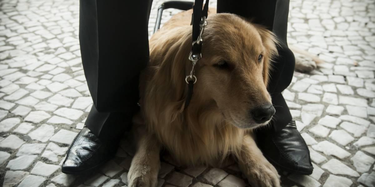 Projeto de Brasília já entregou 51 cães-guia em todo o país