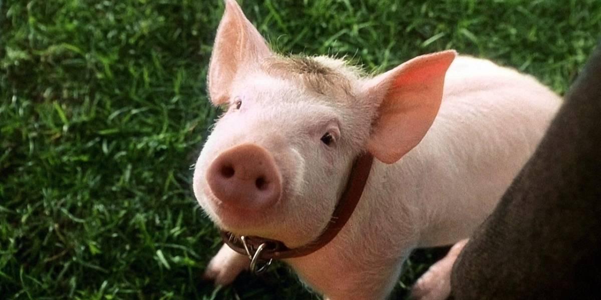 Científicos logran revivir cerebros de cerdo fuera de sus respectivas cabezas