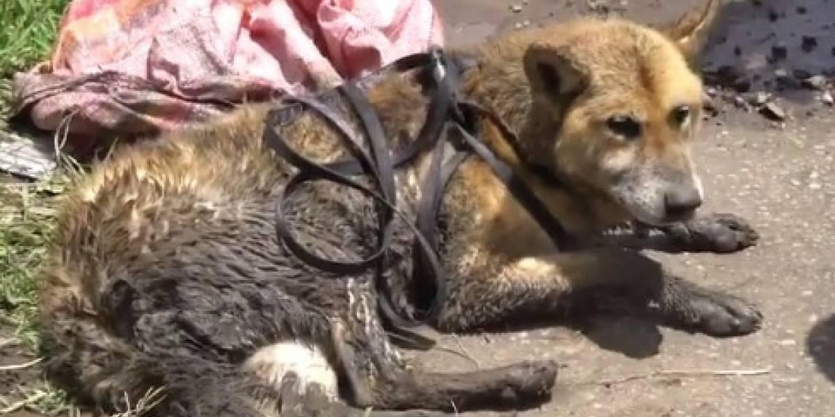 Video: Así fue el rescate de un perro que cayó en una quebrada en Quito