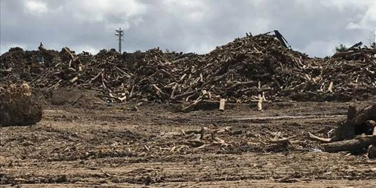 Cuerpo de Ingenieros intentará reducir polvo fugitivo del material vegetativo en área de compactación en Guaynabo