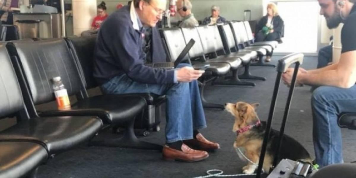 Cadela conforta estranho em aeroporto e emociona passageiros
