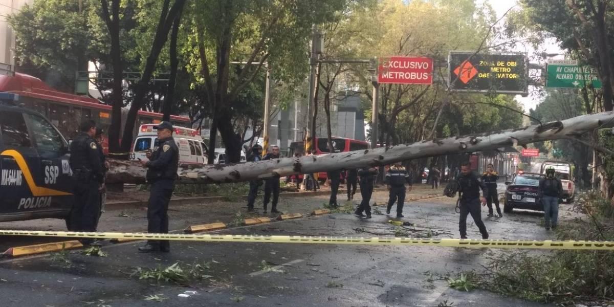 Árbol caído tras tormenta provoca caos vial en Insurgentes Sur