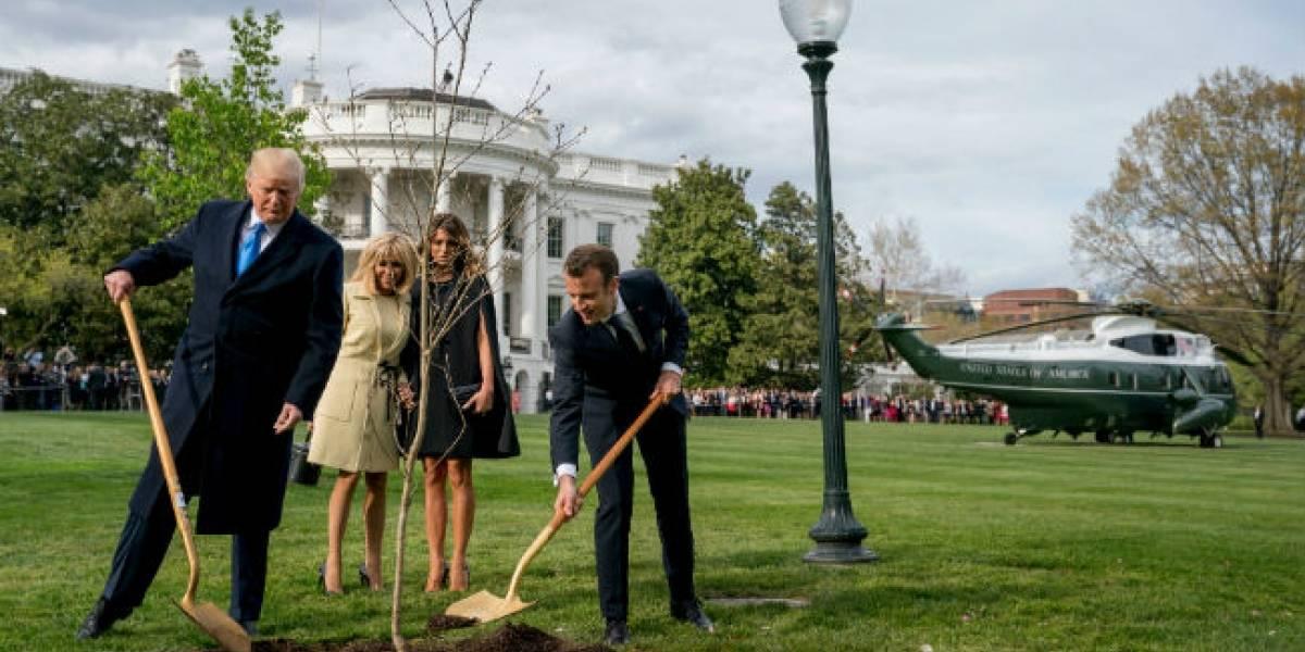 Desaparece árbol que Trump y Macron plantaron en la Casa Blanca