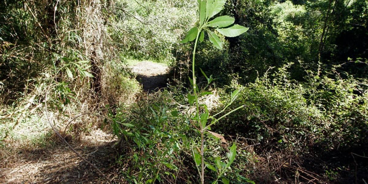 Primera medición de CO2 en bosque nativo reveló cómo lo afecta el cambio climático