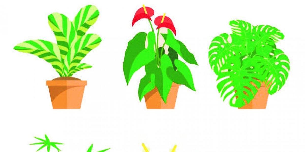Nuestra Familia: Consejos para cuidar las plantas en el interior de la casa