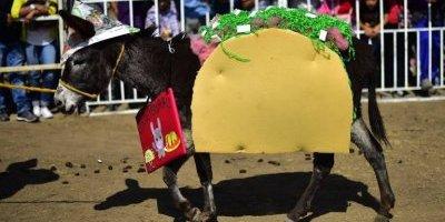 La Feria del Burro 2018