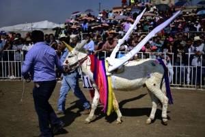 Feria del Burro 2018