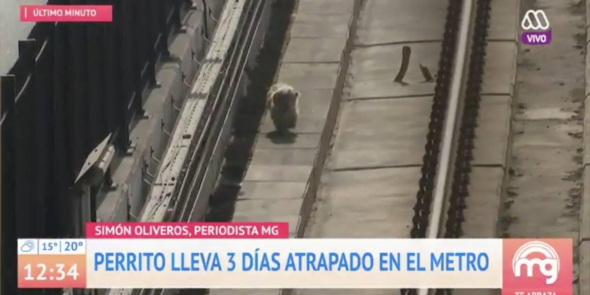 Perrito lleva 3 días atrapado en el metro
