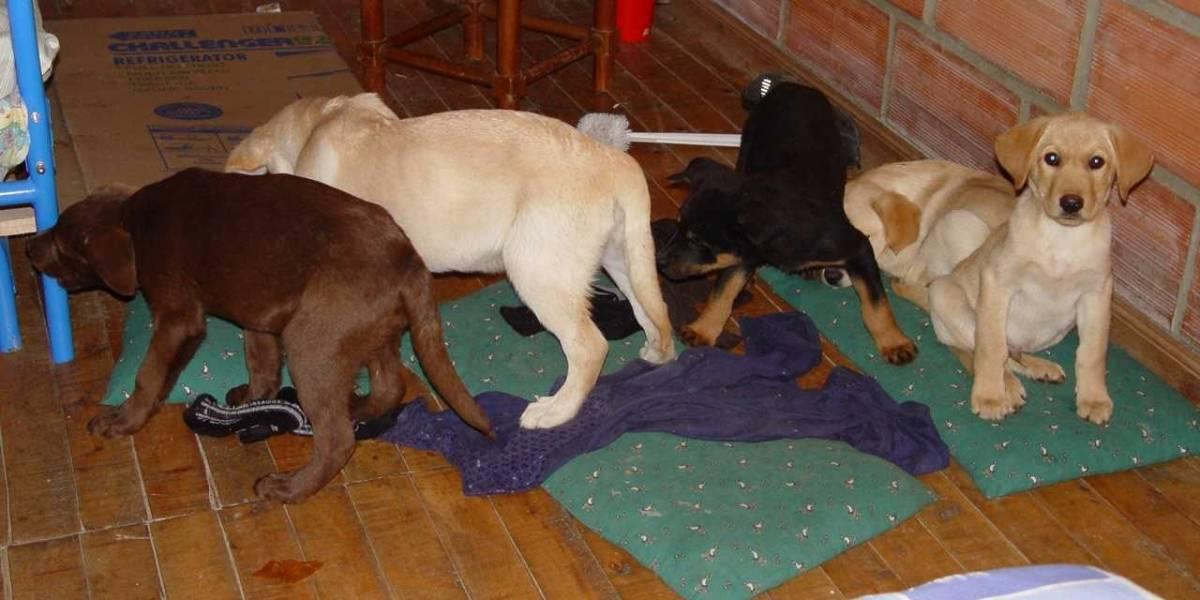 Crueldad animal: Veterinario usaba el abdomen de cachorritos para transportar heroína