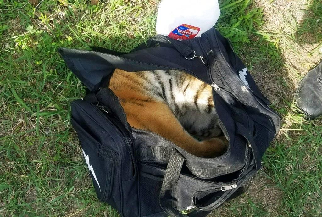 Cachorro de tigre abandonado en frontera México-Texas