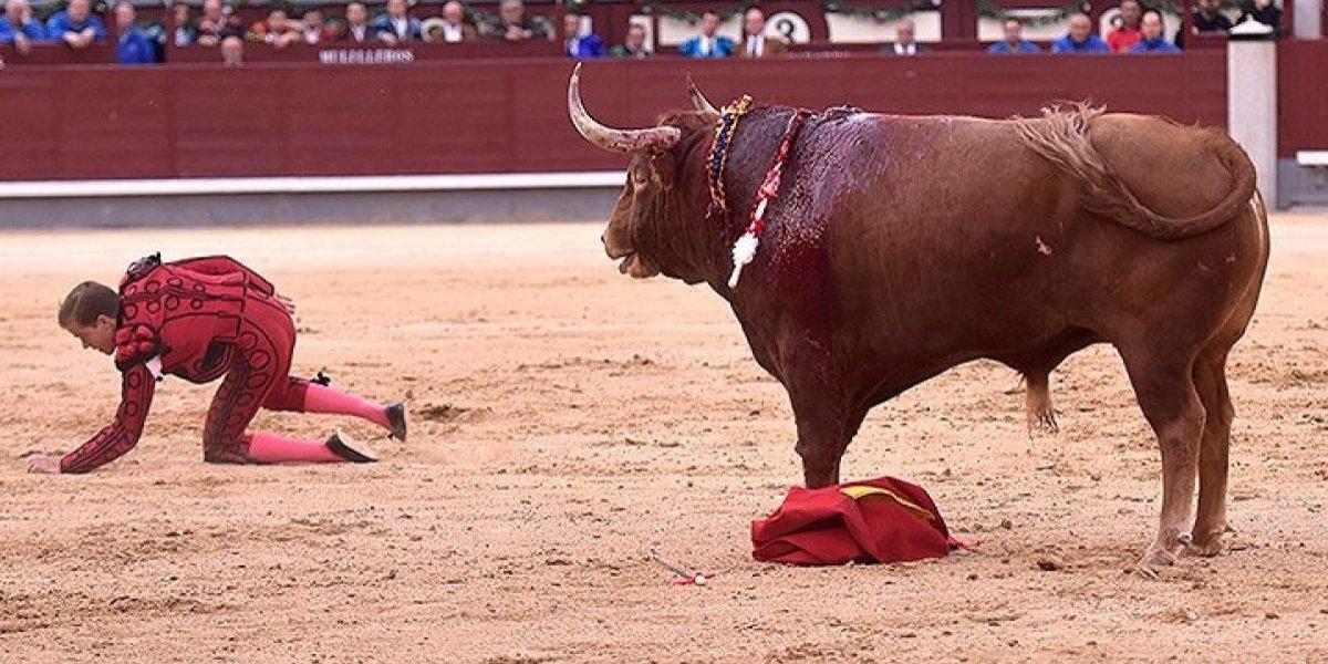 Cornada destroza muslo izquierdo a torero en España