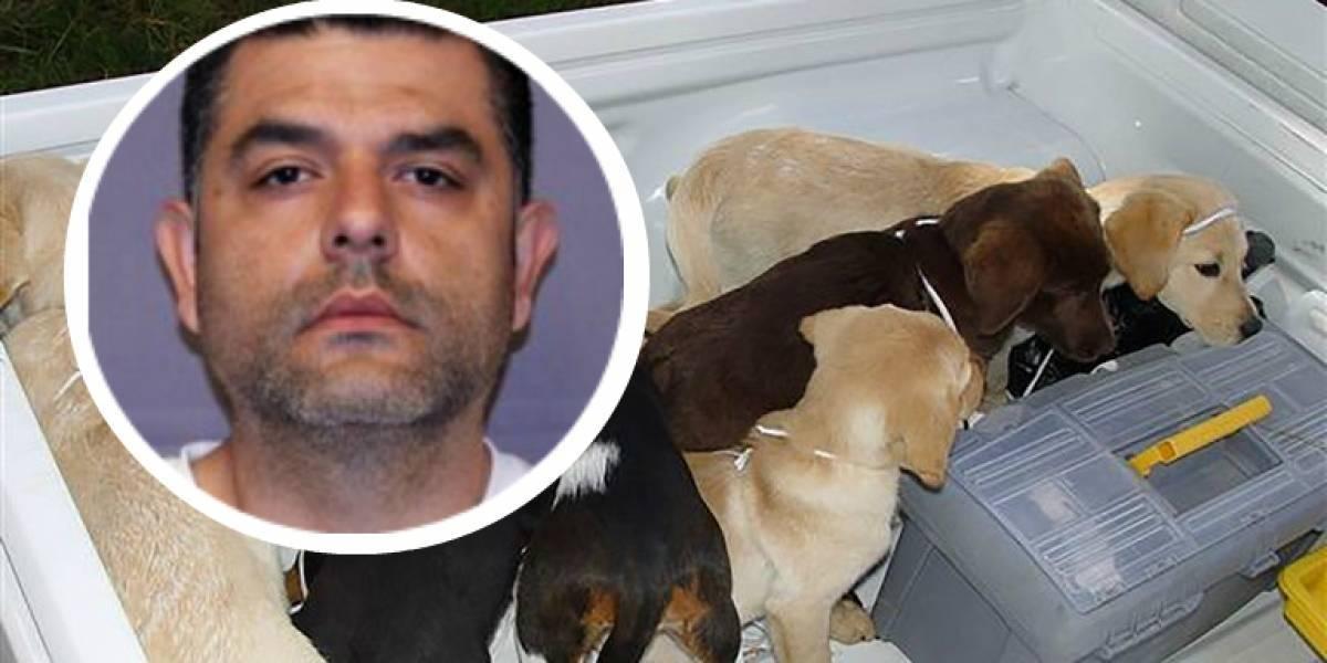 Veterinario utilizaba perros para traficar heroína hacia Estados Unidos