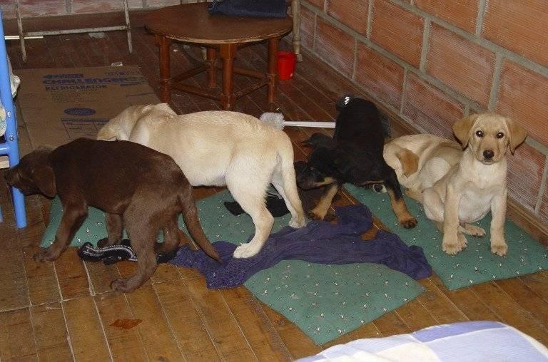 Perros utilizados para narcotráfico