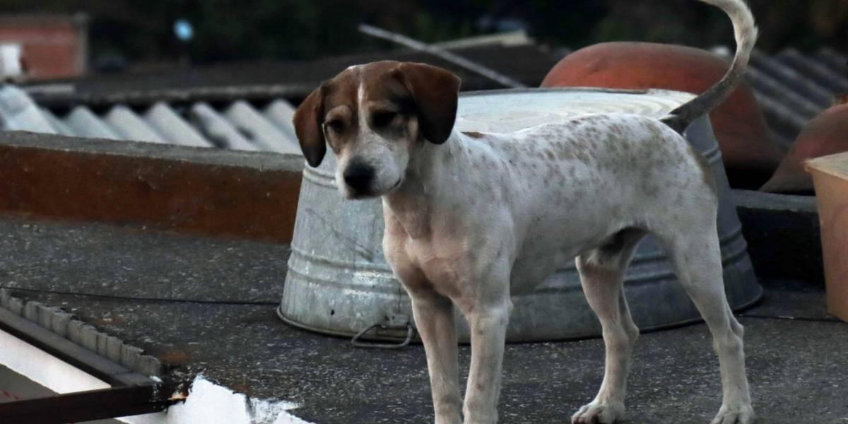 Proponen multar a personas que alimenten a perros callejeros