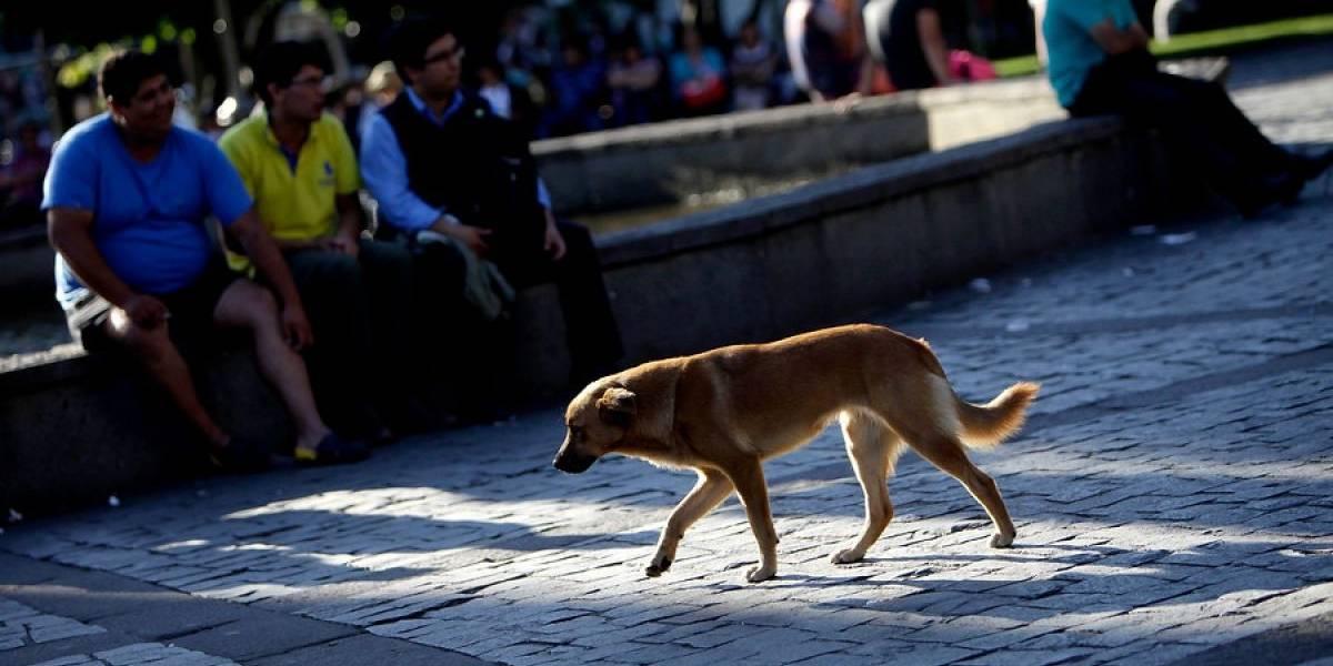 Perro se mete a pelea callejera de borrachos y el resultado es épico: mira el viral que la rompe en las redes sociales
