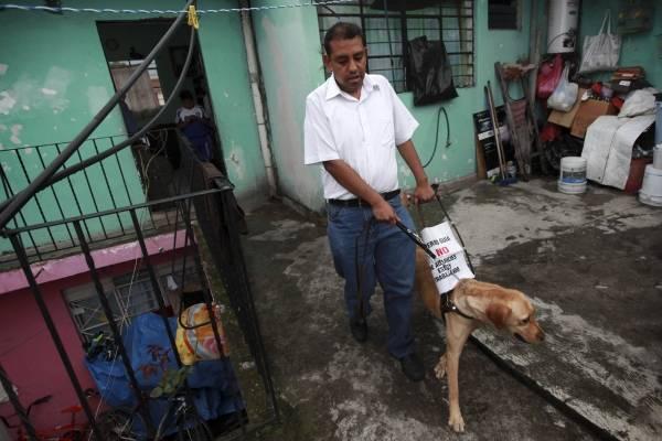 Perro Guía, Perro Lazarillo, Perro de acompañamiento